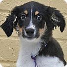 Adopt A Pet :: Ivan von Ingel
