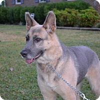 Adopt A Pet :: Ellie - Greensboro, NC