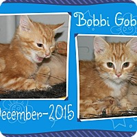 Adopt A Pet :: Bobbi Goblin - Princeton, WV