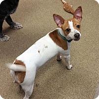 Adopt A Pet :: Phineas - Columbus, OH