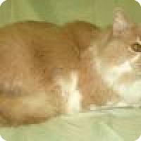Adopt A Pet :: Fletcher - Powell, OH
