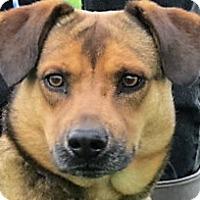 Adopt A Pet :: Chalrie - Germantown, MD