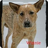 Adopt A Pet :: Winnie - Old Saybrook, CT