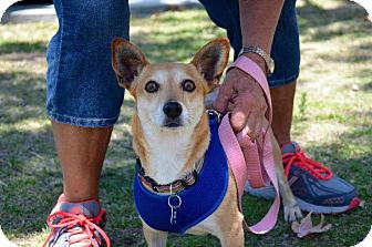 Terrier (Unknown Type, Medium) Dog for adoption in Thousand Oaks, California - Jolanda