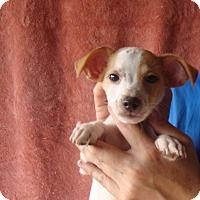 Adopt A Pet :: Milo - Oviedo, FL