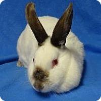 Adopt A Pet :: Gwendolyn - Woburn, MA