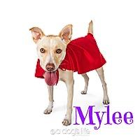 Adopt A Pet :: Mylee - Scottsdale, AZ