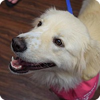Adopt A Pet :: Molly #0551 - Fort Worth, TX