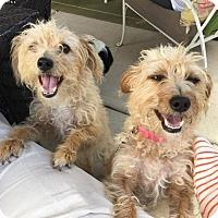 Adopt A Pet :: Rose - Tijeras, NM
