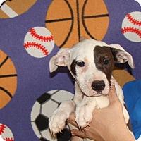 Adopt A Pet :: Nikki - Oviedo, FL