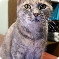 Adopt A Pet :: Canela - Bethesda, MD