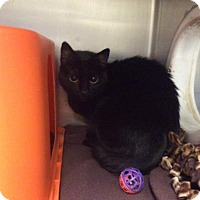 Adopt A Pet :: Brylee - Janesville, WI