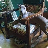 Adopt A Pet :: Dom - Wymore, NE