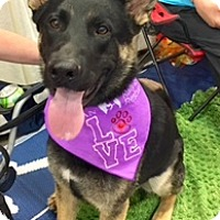 Adopt A Pet :: Tinte - Scottsdale, AZ