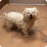 Adopt A Pet :: Butch - Philadelphia, PA