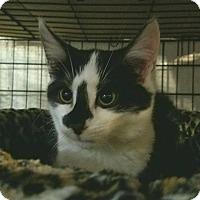 Adopt A Pet :: Gene - Trevose, PA