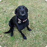 Adopt A Pet :: Ember - Austin, TX