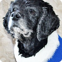 Adopt A Pet :: Tessie - Newington, VA