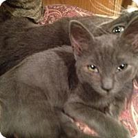 Adopt A Pet :: Olivia - East Hanover, NJ