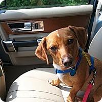 Adopt A Pet :: Maggie2 - Richmond, VA