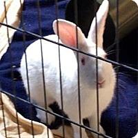 Adopt A Pet :: Munchie - Corona, CA