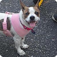 Adopt A Pet :: Pixie Wilder - Southampton, PA