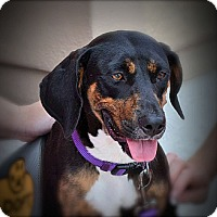 Adopt A Pet :: Sadie - Naples, FL