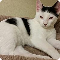 Adopt A Pet :: Twinkles - Phoenix, AZ