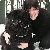 Adopt A Pet :: MING - Dix Hills, NY