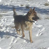 Adopt A Pet :: Dancer - Ashland, OR