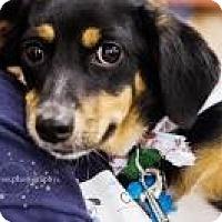 Adopt A Pet :: Cash - Minneapolis, MN