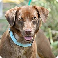 Adopt A Pet :: Cocopetal - Gainesville, FL