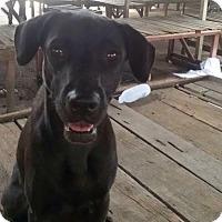 Adopt A Pet :: 'TIANG' - Agoura Hills, CA