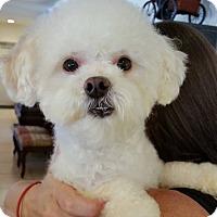 Adopt A Pet :: Casanova - Ft. Lauderdale, FL
