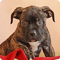 Adopt A Pet :: Mango - Waldorf, MD