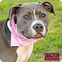 Adopt A Pet :: Kaylee - Marina del Rey, CA