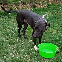 Adopt A Pet :: Jake - Wood Dale, IL