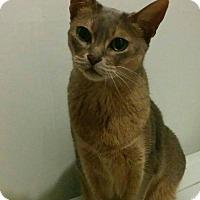 Adopt A Pet :: Kaleesi - Montreal, QC