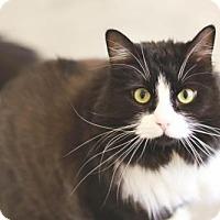 Adopt A Pet :: Luna - Boise, ID