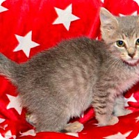 Adopt A Pet :: Christine - Buford, GA