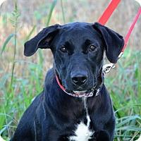 Adopt A Pet :: Sadie - DuQuoin, IL