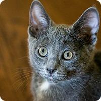 Adopt A Pet :: Phoebe - Pasadena, CA