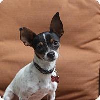 Adopt A Pet :: Maise - tampa, FL