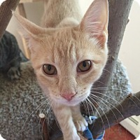 Adopt A Pet :: Katherine - North Haven, CT