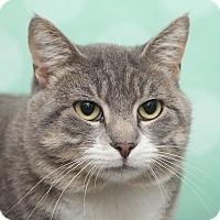 Adopt A Pet :: Maliki - Chippewa Falls, WI