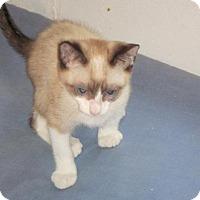 Adopt A Pet :: Mel-Boulder #3 Rockie - Paradise, CA