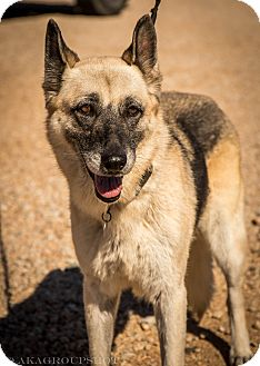 German Shepherd Dog Mix Dog for adoption in Phoenix, Arizona - Mattie
