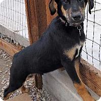 Adopt A Pet :: Athos - Logan, UT