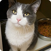 Adopt A Pet :: Verns - Salem, NH