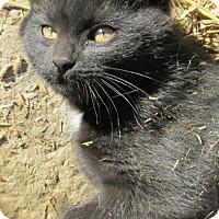 Adopt A Pet :: Octavio - Buhl, ID